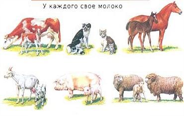 молокоживотных